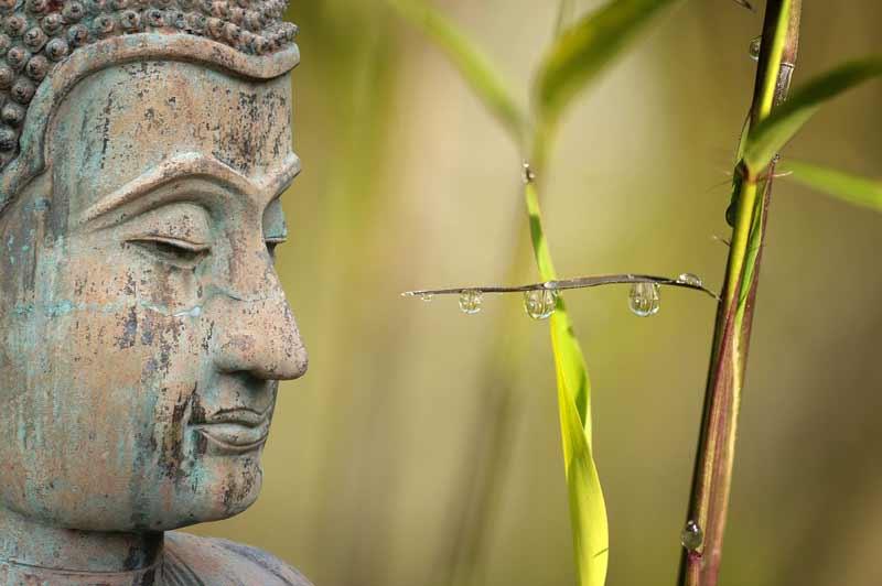 Buda-el-iluminado-en-su-nacimiento-lo-llamaron-Siddhartra
