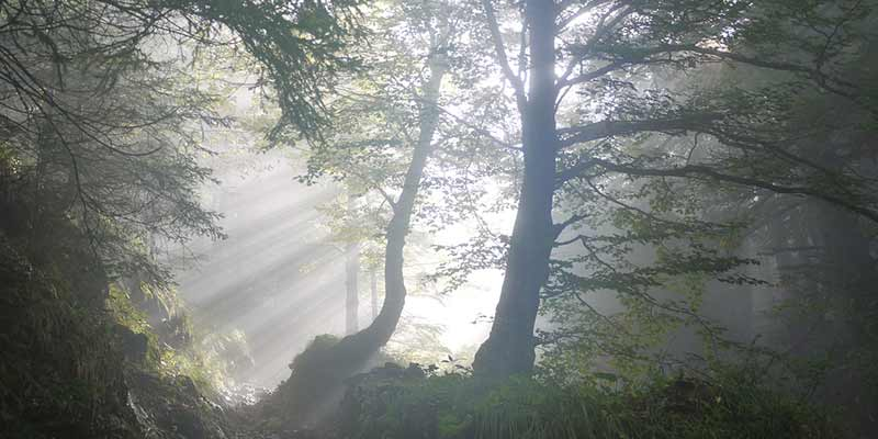 el-bosque-cerca-al-rio-la-flor-de-tisa