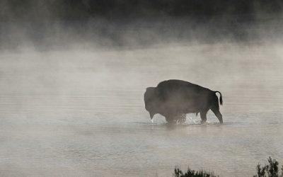 La laguna del Toro