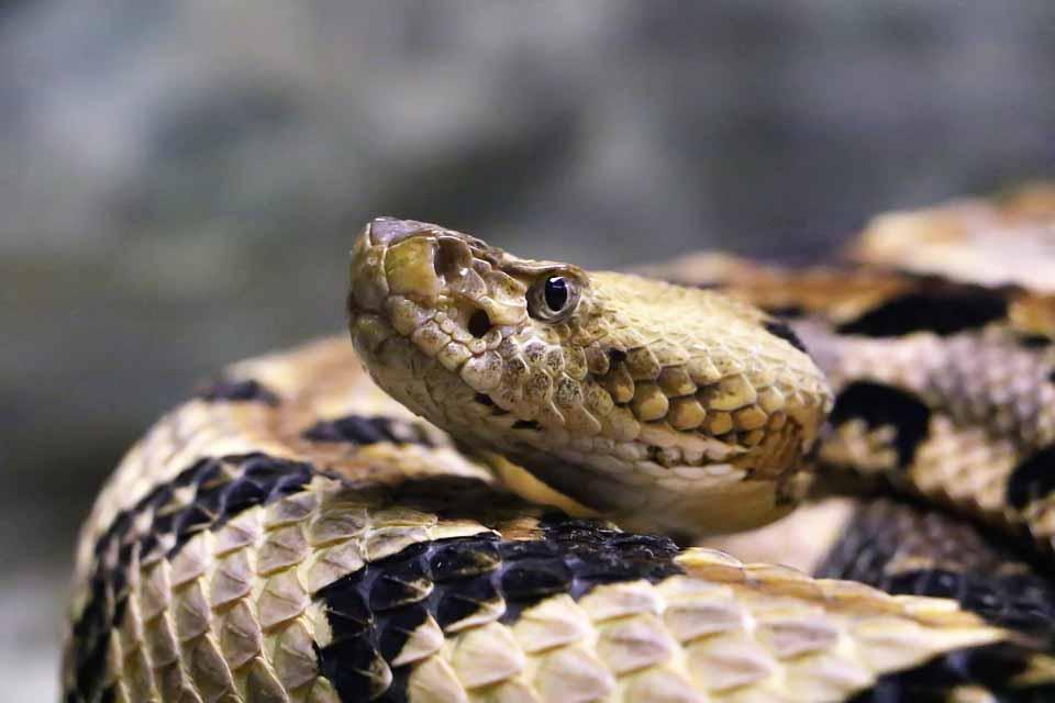 la-serpiente-atrapada-bajo-un-tronco