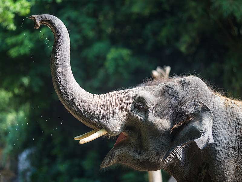 elefante-que-se-peleo-con-la-tortuga