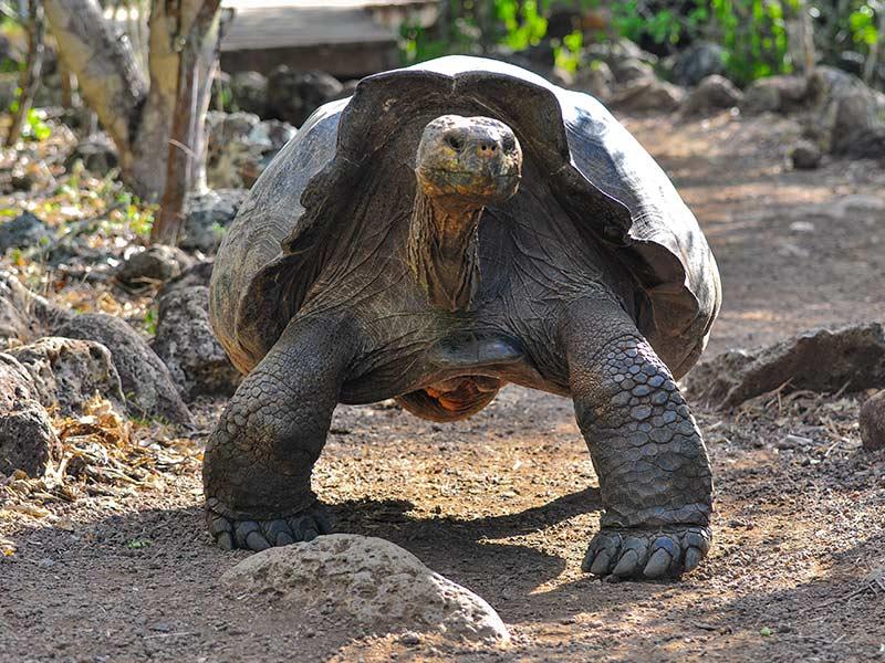 tortuga-que-le-gana-al-elefante