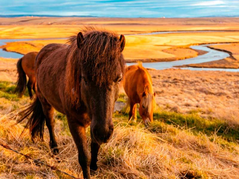 caballo-trabajador-se-queda-solo