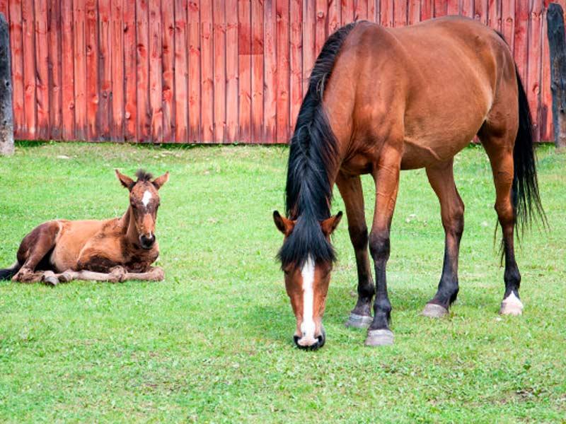 los-dos-caballos-crecieron-muy-diferentes