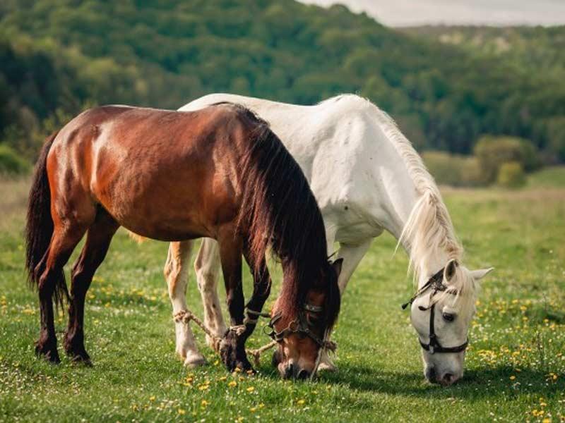 un-caballo-se-queda-quieto-el-otro-trabaja-duro