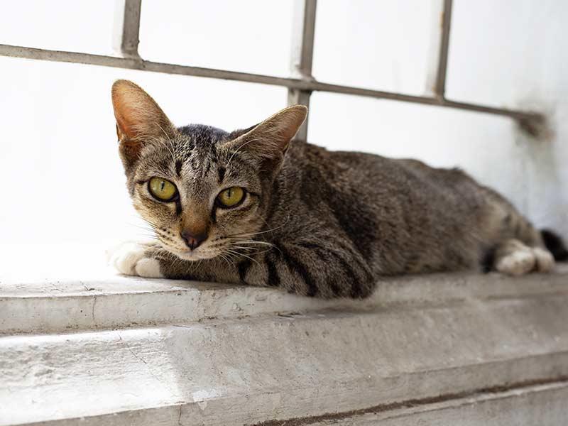 el-gato-indiferente-al-mundo