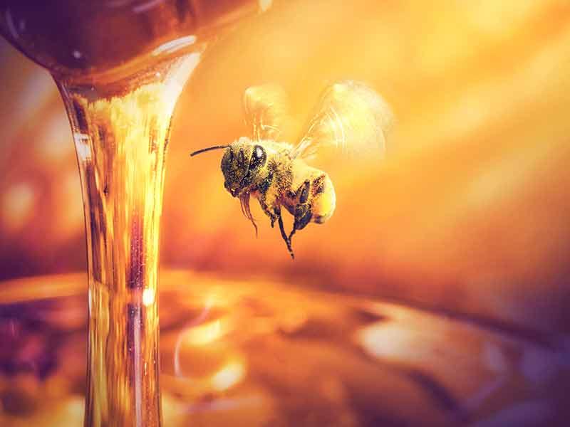 miel-de-abeja